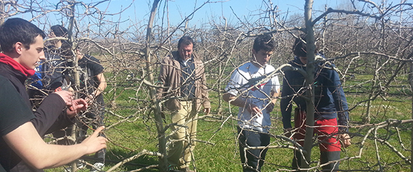 Pruning at Sant Pere Pescador